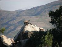 animais da montanha